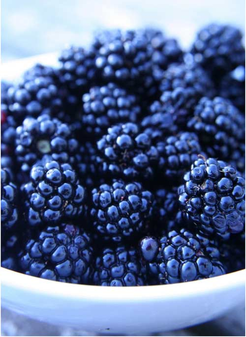 the health benefits of blackberry Consider the health benefits of these nine berries, from acai to goji: more from  us news: green smoothies 101: health benefits and recipes.