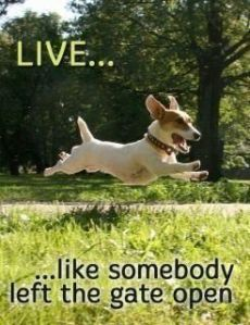 """""""live... like somebody left the gate open"""""""