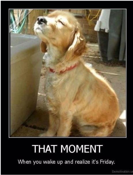 friday-pup