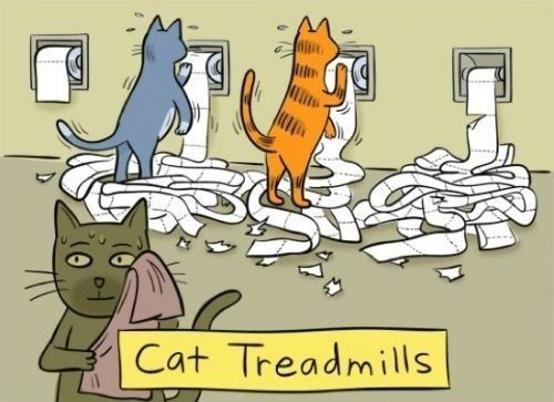 cat-treadmill
