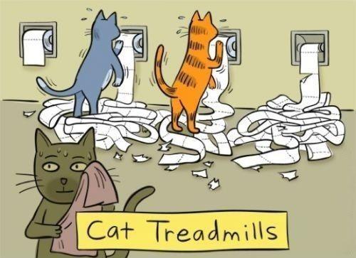 cat-treadmill